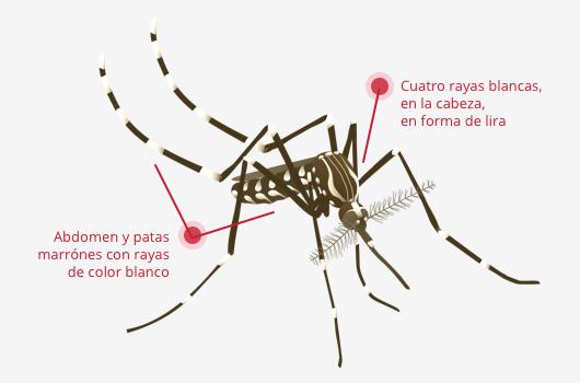 Mosquito de la fiebre amarilla