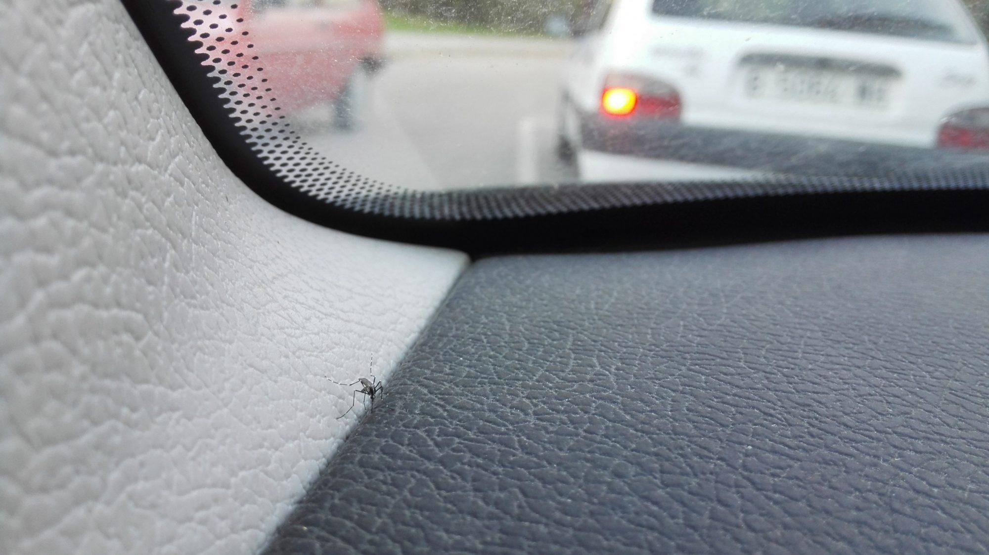 Fotos de mosquitos tigre dentro de los coches enviadas por la ciudadanía con la app. Autor: Mosquito Alert CC-BY
