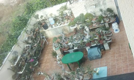 Una terraza con centenares de macetas. Mosquito Alert CC-BY