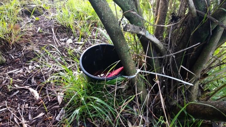Trampas de ovoposición para mosquitos en lugares estratégicos. Fuente: UEX