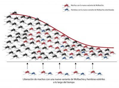 Wolbachia China Aedes albopictus mosquito tigre