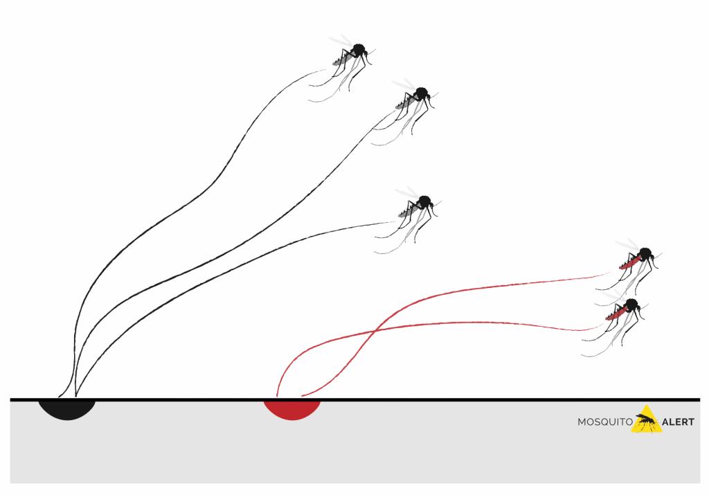 Despegue de un mosquito tigre España Valencia Barcelona