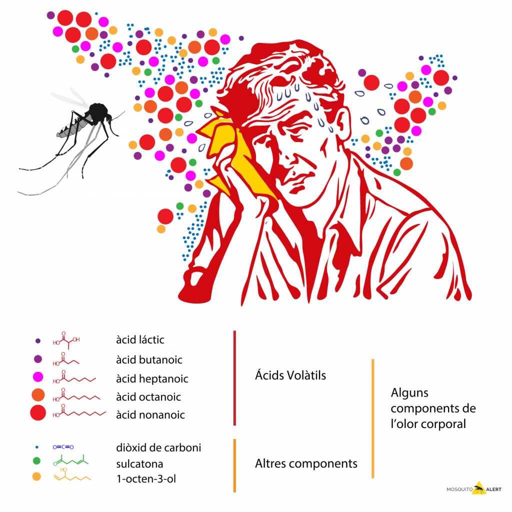 olores humanos picadas mosquitos sudor