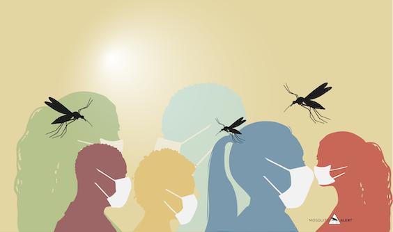 Covid19 mosquitos