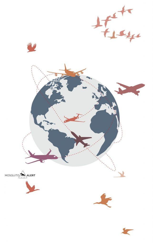 Globalización enfermedades emergentes Mosquito Alert