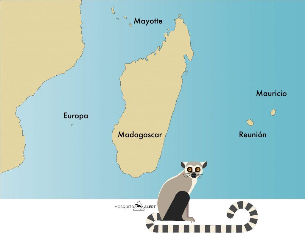 Aedes aegypti Madagascar Africa Mosquito Alert origen