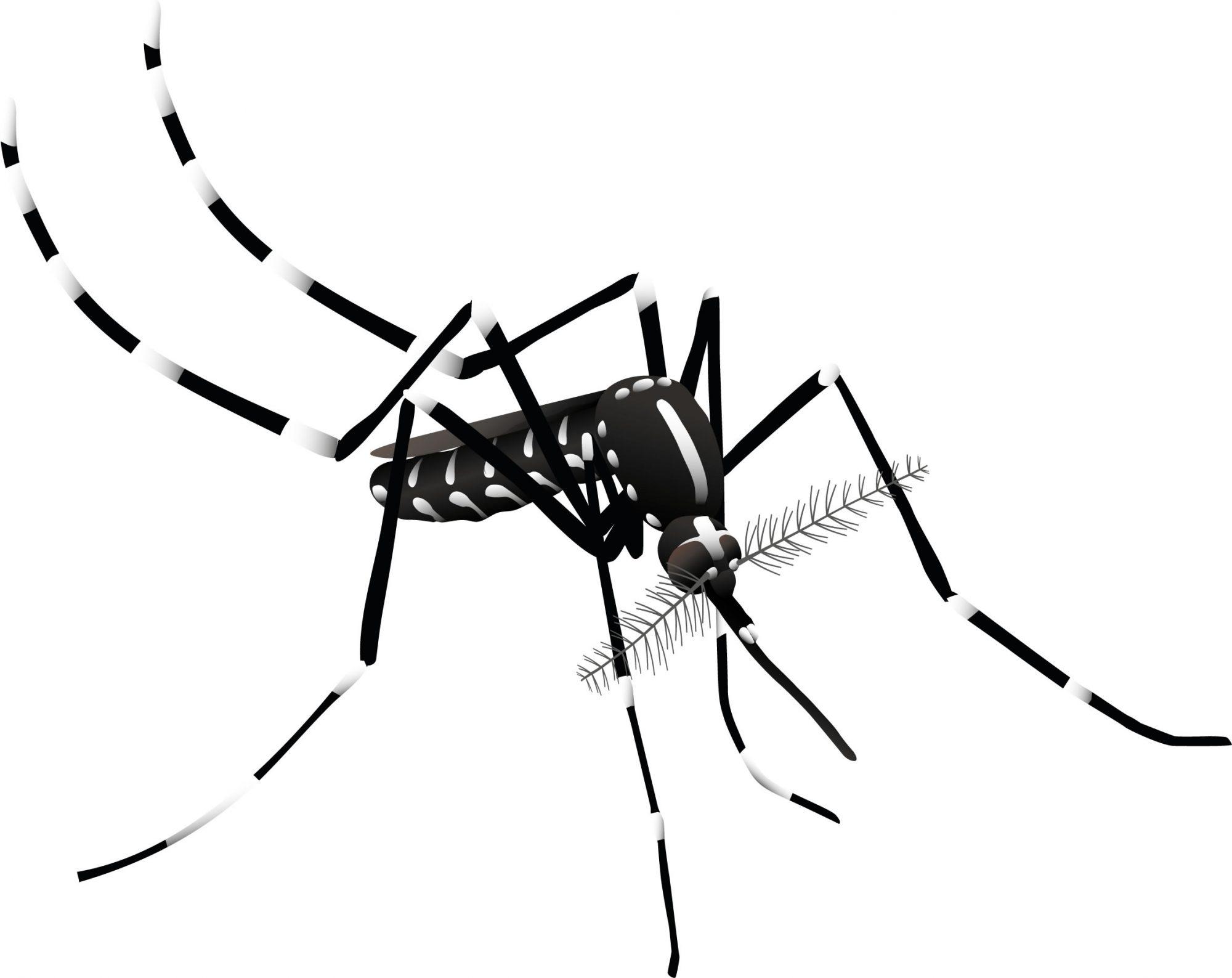 Aedes_albopictus_Lateral (1) Jose Luis Ordóñez (CC BY NC)