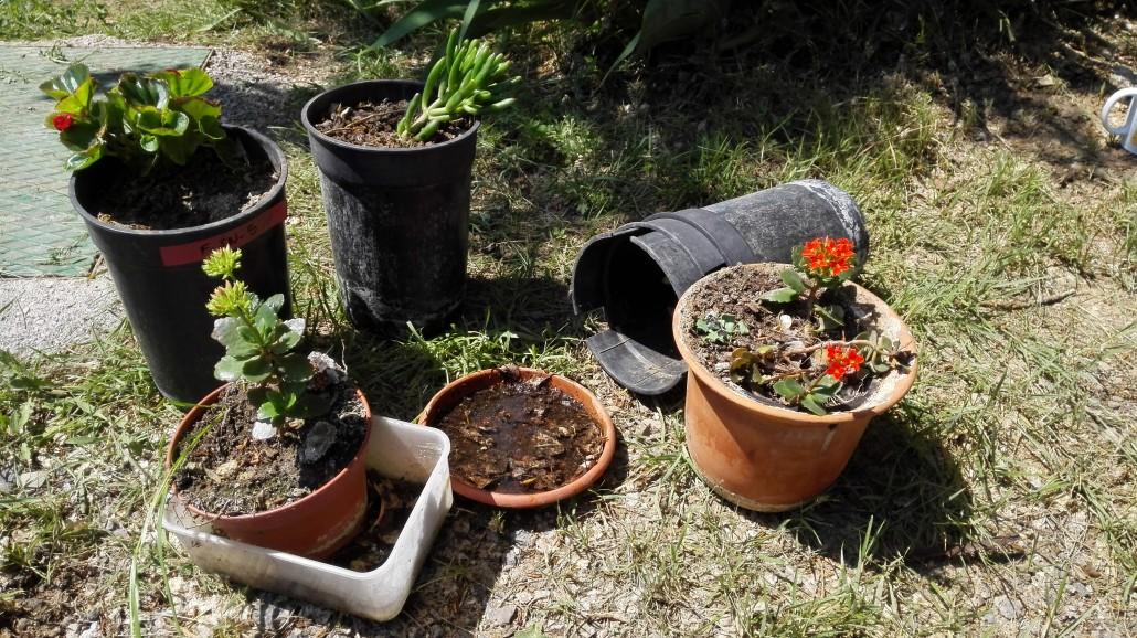 Macetas y platos en un jardín. Foto: Mosquito Alert