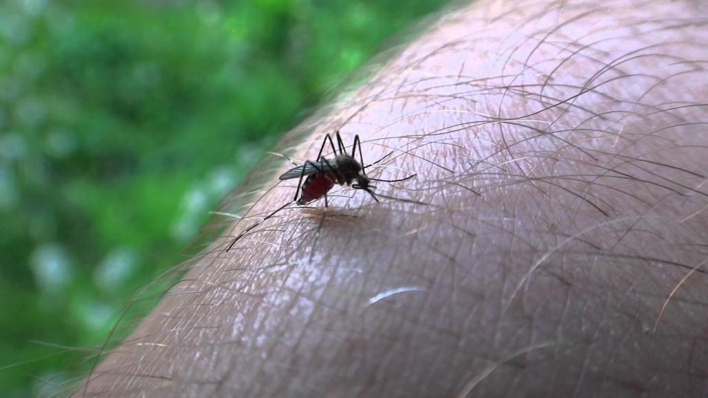 Picadura de mosquito.